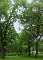 21-104-5005 парк Горького Мукачеве.jpg