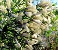 26 Flower Bennetts Point RD Green Pond SC 6853 (12397684193).jpg
