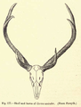 4. antlers unicolor.png