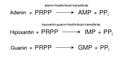 7 foszforibozil-transzferázok.png