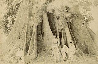 Bissau - Poilão do Baluarte da Puana