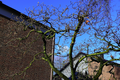 AL-D-0008 Platanus x acerifolia alley on Pigageallee, Benrath. Reader-13.png
