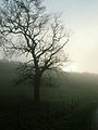 A December view of Woodnook Valley, Little Ponton, Lincolnshire, England 13.JPG