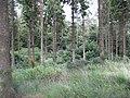 A Pitmedden Forest annexe - geograph.org.uk - 1554013.jpg