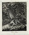 A bloodhound sniffing a trail in the forest. Etching by J. E Wellcome V0021040ER.jpg