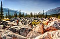 A field of rocky boulders in the valley between the mountains in Jasper National Park, in the Canadian Rockies.jpg