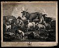 A goatsherd milking a goat in a field surrounded by other an Wellcome V0022940.jpg