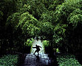 A monk practicing kung fu in the bamboo forest inside the Shaolin Temple.jpg