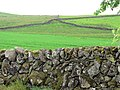 A pattern of stone walls - geograph.org.uk - 484262.jpg
