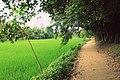 A village way.jpg