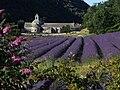 Abbaye de Sénanque (Gordes-Vaucluse) vue du Nord.JPG