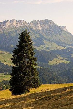 Entlebuch Biosphere - View from Finsterwald