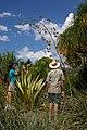 Agavaceae, Mt Coot-tha Botanic Gardens, Toowong IMGP0009.jpg