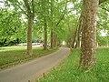 Allée d'érables - panoramio.jpg