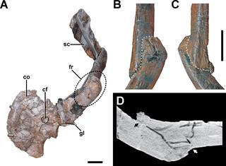 Paleopathology Archaeological sub-discipline