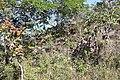 Alto Araguaia - State of Mato Grosso, Brazil - panoramio (473).jpg
