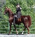 American Saddlebred6.jpg