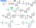 Aminoacylation of transfer RNA-rus.png