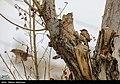 Anbaran-e Olya 2020-01-30 07.jpg