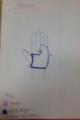 Anterior force diagram.png