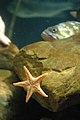 Aquarium (4477488002).jpg