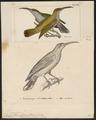 Arachnothera affinis - 1700-1880 - Print - Iconographia Zoologica - Special Collections University of Amsterdam - UBA01 IZ19000145.tif