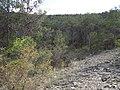 Arboles Entre los llanos l y Sierra Hermosa, Coahuila - panoramio.jpg