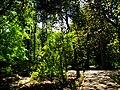 Arbres arbres arbres (Jardí Botànic de València).JPG