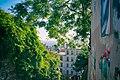 Arbres rue du calvaire à Montmartre.jpg