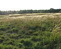 Arminghall Henge - the eastern perimeter - geograph.org.uk - 1391553.jpg