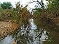 Arroyo MARTIN GRANDE - panoramio.jpg