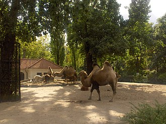 Natura Artis Magistra - Image: Artis camel Photo by Persian Dutch Network