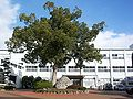 Asakura high school.jpg