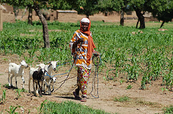 Kambing merupakan hewan ternak yang penting untuk peternak kecil-kecilan di  kebanyakan negara f6ebf1fe86