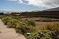 At Tenerife 2020 487.jpg