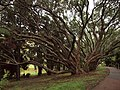 Auckland New Zeland City Park.jpg