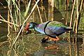Austin Roberts Bird Sanctuary-034.jpg