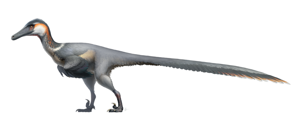 Austroraptor Restoration