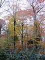 Autumn colours - Nov 2013 - panoramio.jpg