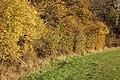 Autumn colours on the fringe of Ufton Wood - geograph.org.uk - 1556428.jpg
