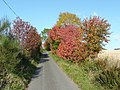 Autumn colours on the road to Mains of Pitgur - geograph.org.uk - 1543654.jpg
