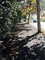 Autumn in Rome 5.jpg