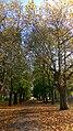 Autumn in Whitworth Park - panoramio (3).jpg