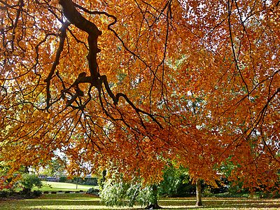 Autumn in the Museum Gardens (5129680314).jpg