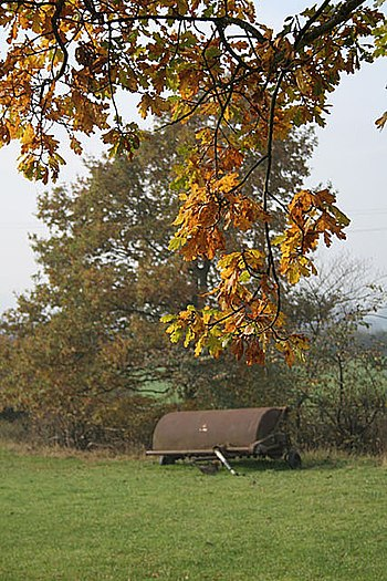 English: Autumn leaves near Turkey Farm
