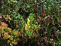 Autumn shrubs - Flickr - peganum.jpg