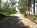 Avenida Carlos Alberto Cioccari - Palma - Santa Maria, foto 06 (sentido N-S) - panoramio.jpg