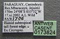 Azteca alfari casent0173824 label 1.jpg