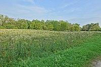 Bad Bellingen Naturschutzgebiet Galgenloch Bild 4.jpg