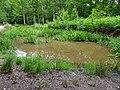 Balade en forêt d'Évreux 002.jpg
